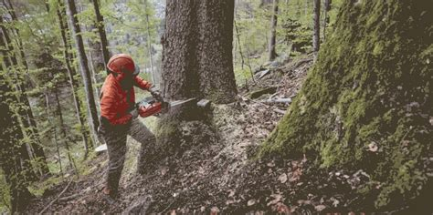 The new MS 462: The lightweight chainsaw with full power