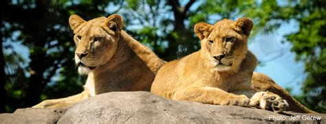 Review of Seneca Park Zoo's A Step Into Africa | Kids Out