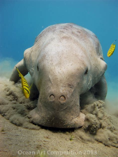 1st Place Compact Behavior Category Underwater Photography
